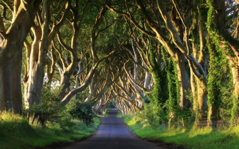 Dark Hedges - © adrianpluskota