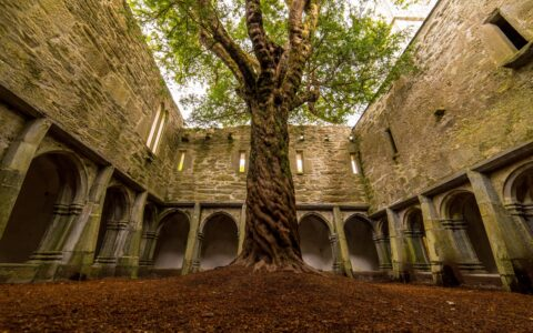 La Muckross Abbey et son arbre incroyable - Luca Genero - Shutterstock