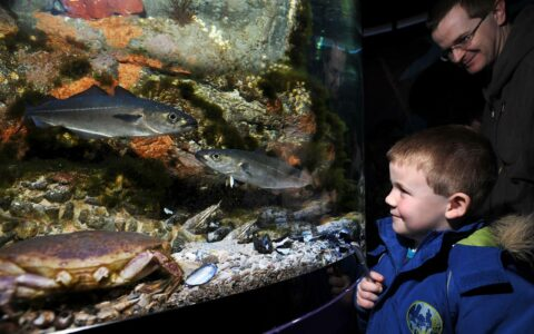 Le Riverwatch Aquarium - https://discovernorthernireland.com