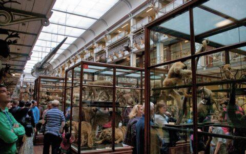 Le Natural History Museum de Dublin