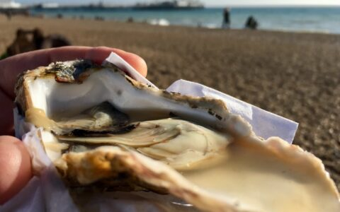 The Carlingford Oyster Festival